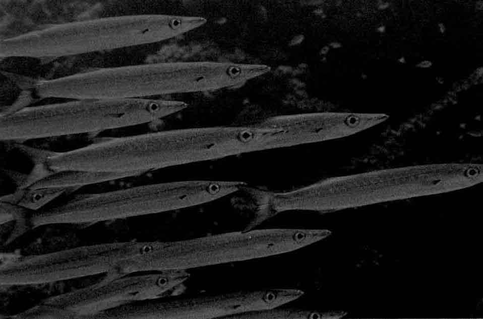 MARINE - Débuter en photo sous-marine : vos conseils Fish6